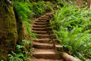 Wooden steps leading to a trail in Oregon